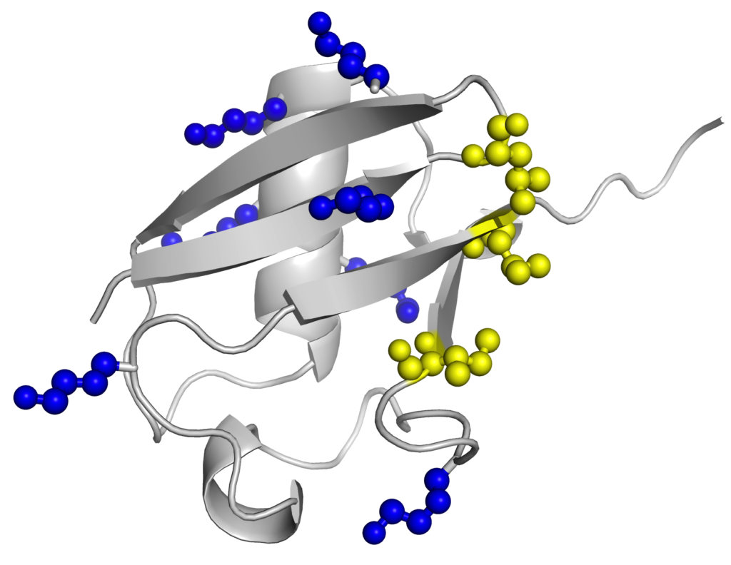 Ubiquitin - lysines in blue.